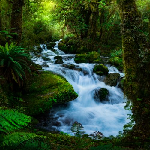 Secret forest, Fiordland New Zealand