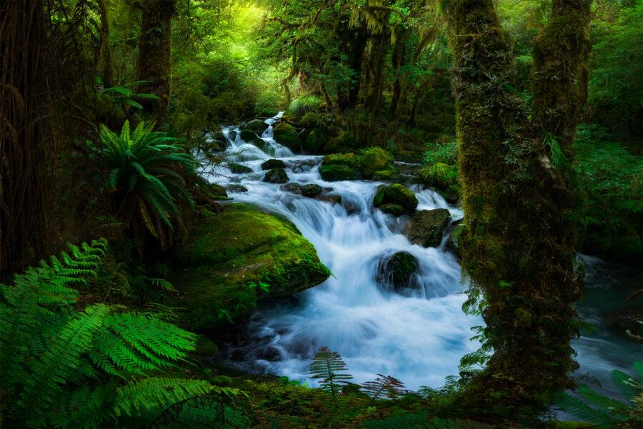 Secret forest, Fiordland New Zealand