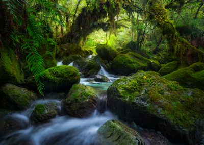 Fiordland-Forest-Will-Patino