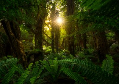 New-Zealand-Native-Forest