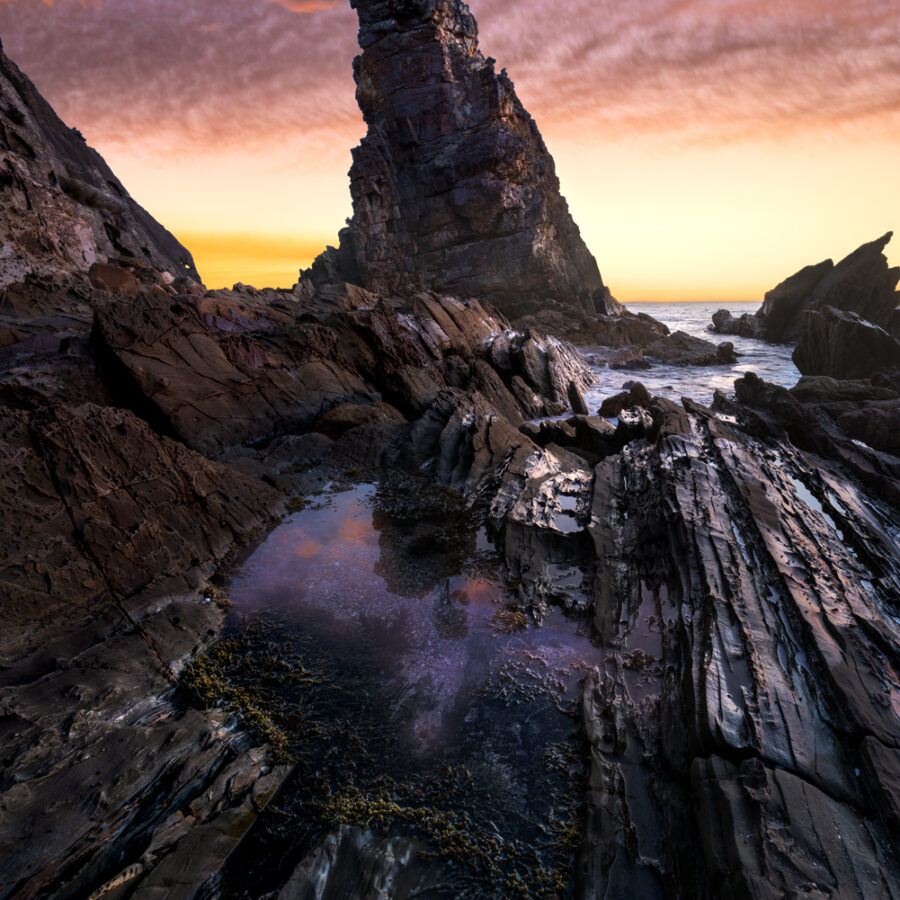 Sunrise, lone tree sea stack Bermagui