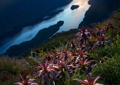Doubtful-Sound-Fiordland-WilliamPatino