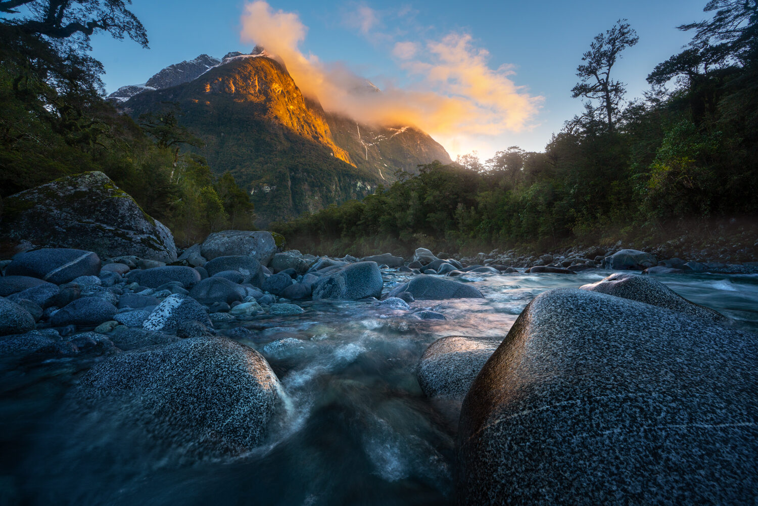 Fiordland forest and river scene