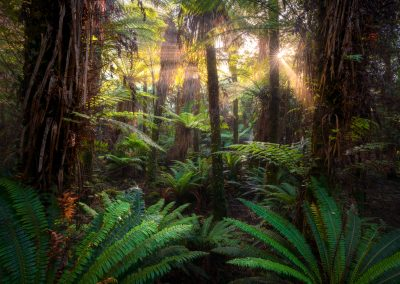 Coastal-Beech-Forest-Fiordland