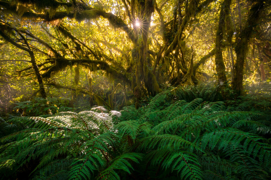 New Zealand ancient forest Fiordland