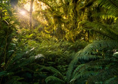 Fiordland-Beech-Forest-WilliamPatino