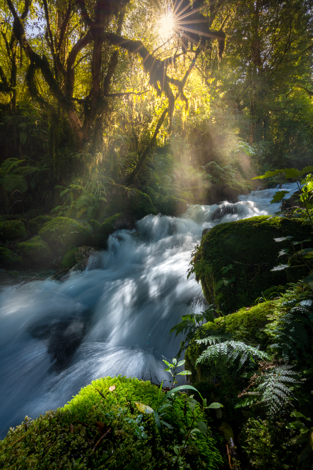Cascades and forest, Fiordland New Zealand