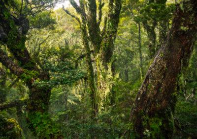 Fiordland-Wilderness-Beach-Forest
