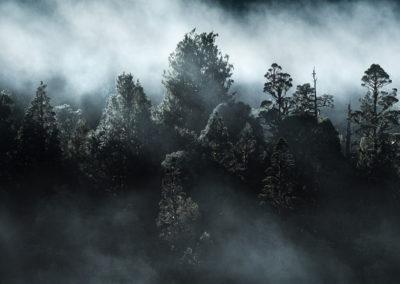 NewZealand-Trees-Mist