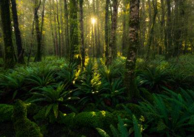 TeAnau-WilliamPatino-Forest