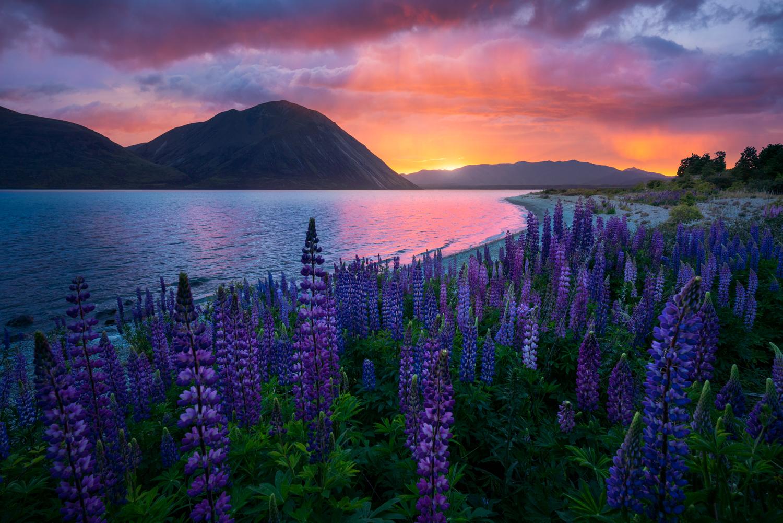 New Zealand, Summer Photography workshops