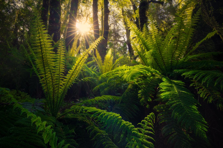 Fiordland-Ferns