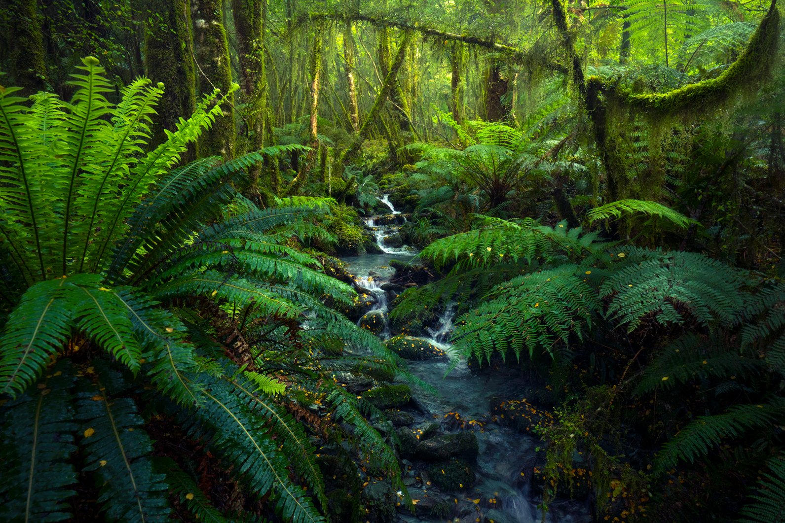 Fiordland-native-forest