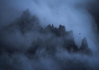 Iceland-Birds