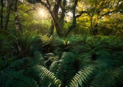 Rebirth-WillPatino-Forest