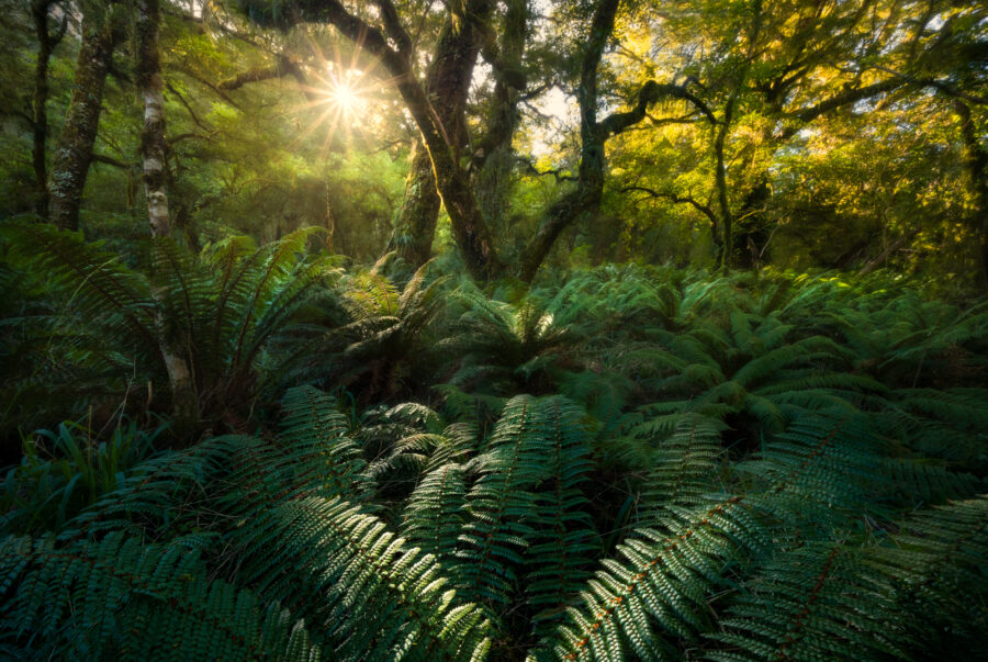 Sunlight shining through the forest
