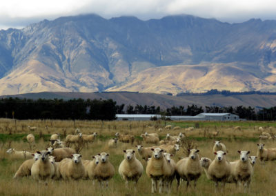 TeAnau-Photography-Competition_41