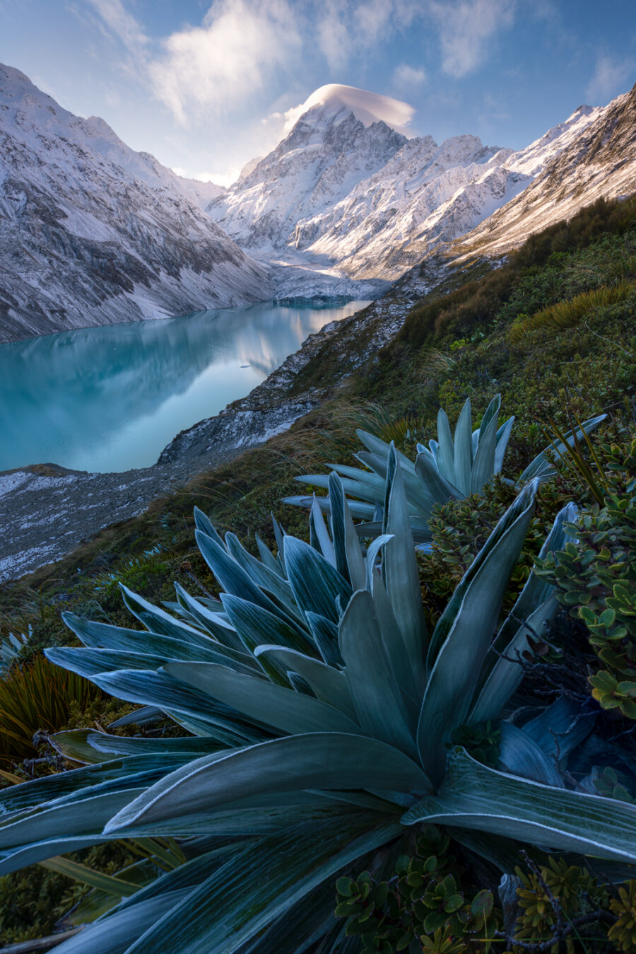 Celmisisas Tikumu, Hooker valley New Zealand
