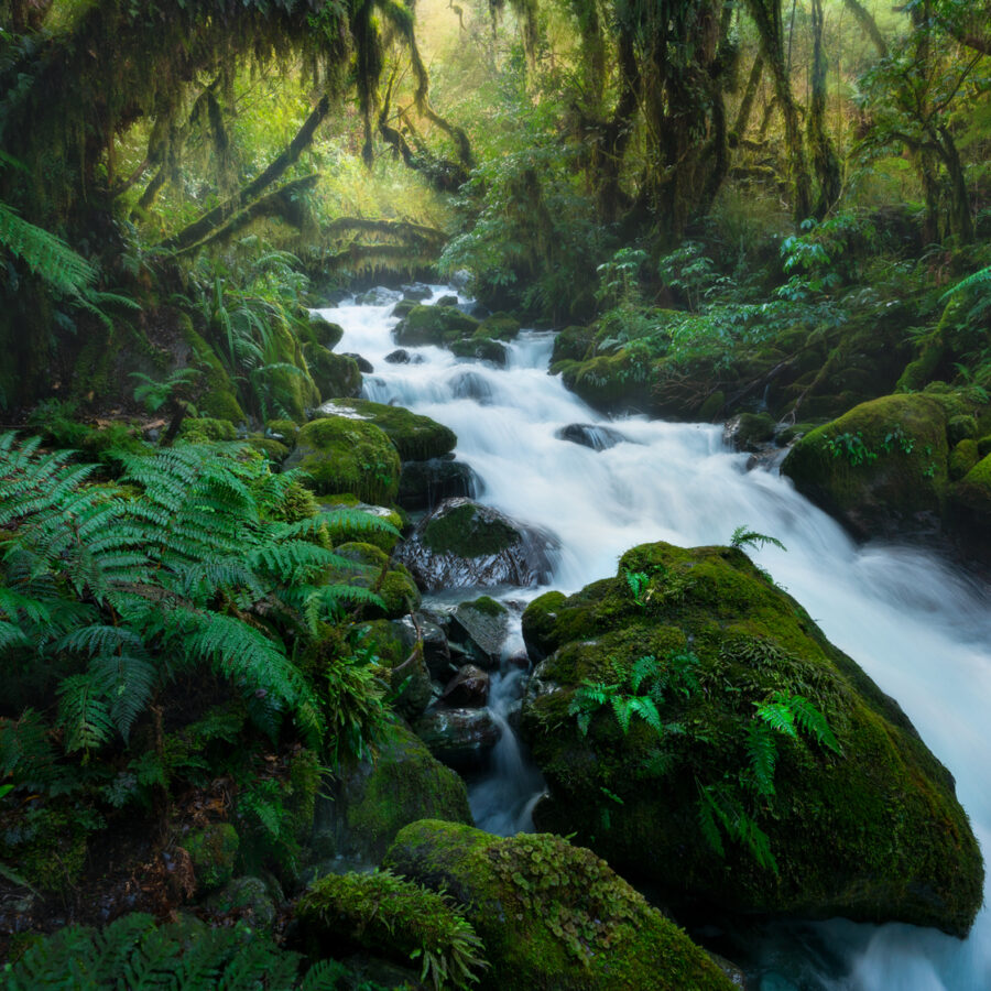 Fiordland lush green cascades and forest. Photography by William Patino.