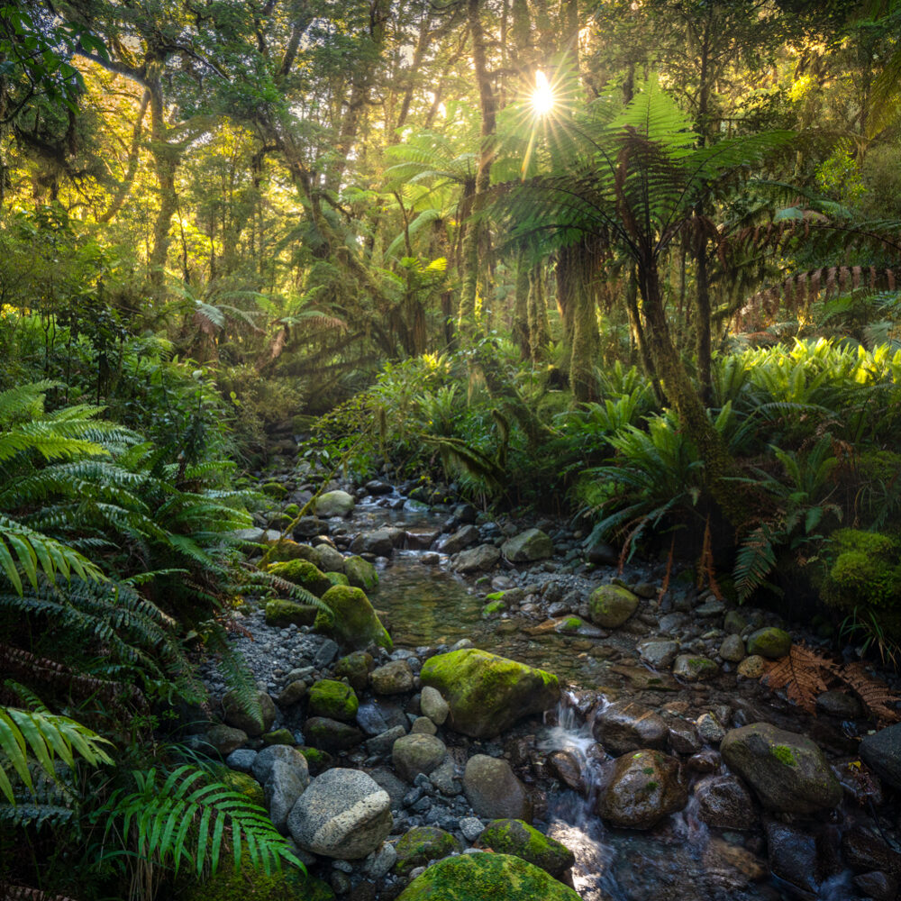 Fiordland rainforest, Copyright William Patino