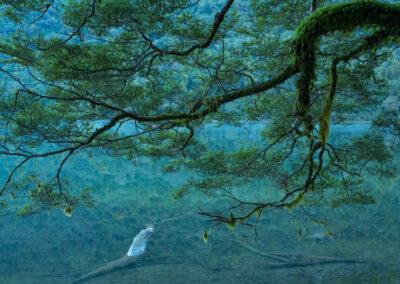 Fiordland trees, moss, Copyright William Patino, New Zealand Landscape Photographer