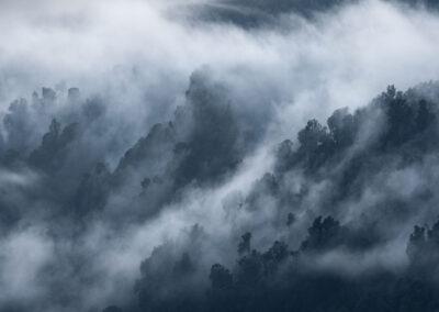 New Zealand trees, Copyright William Patino, New Zealand Landscape Photographer