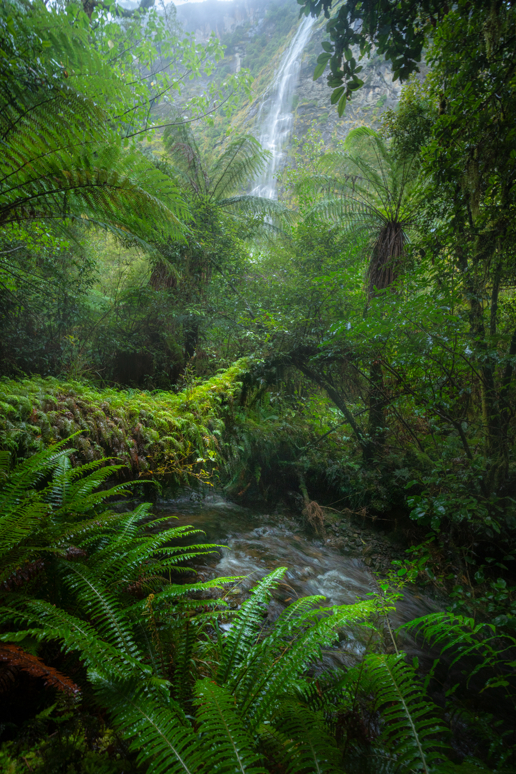 Fiordland Waterfall and rainforest, Copyright William Patino, New Zealand Landscape Photographer