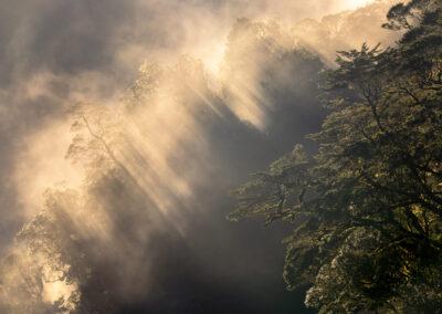 Fiordland Trees