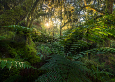 Fiordland forest and sunlight