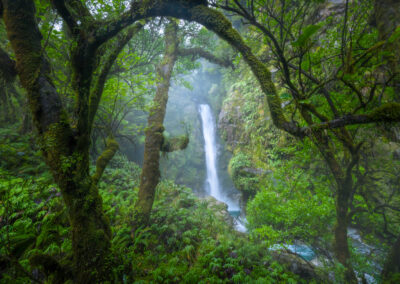 Arched tree and waterfall, New Zealand