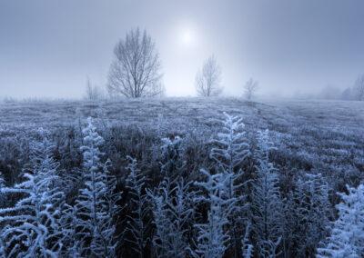 Hoar frost, Twizel New Zealand