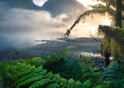 New Zealand forest and mountain fiord scene